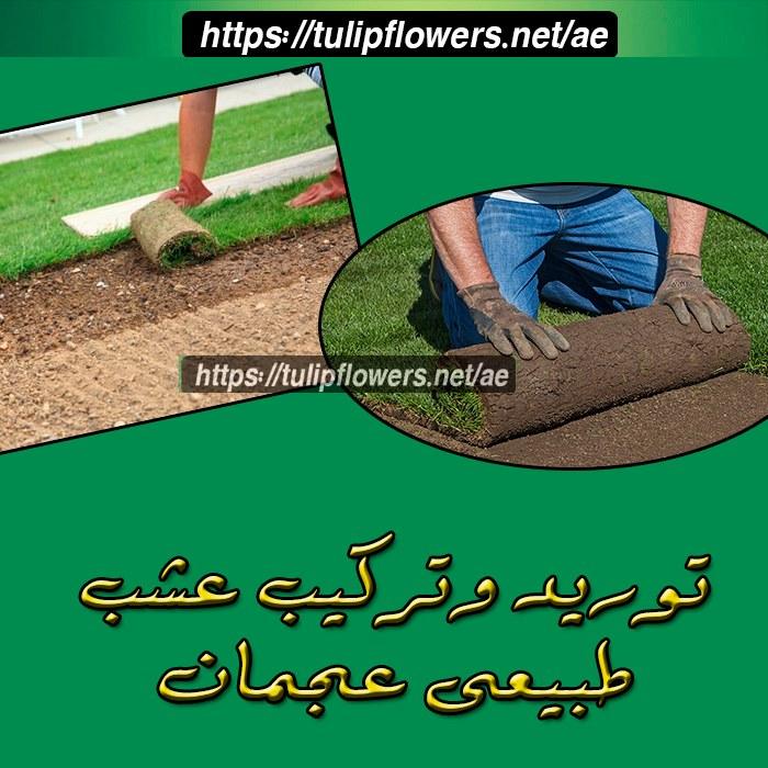 توريد وتركيب عشب طبيعى عجمان